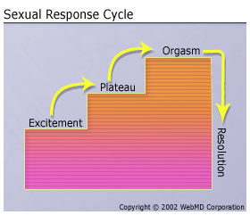 Masters and johnson sexual response cycle in order